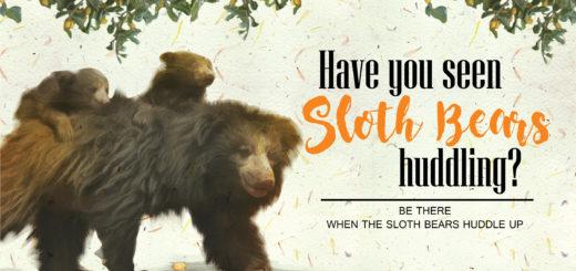 Sloth bears in Sri Lanka