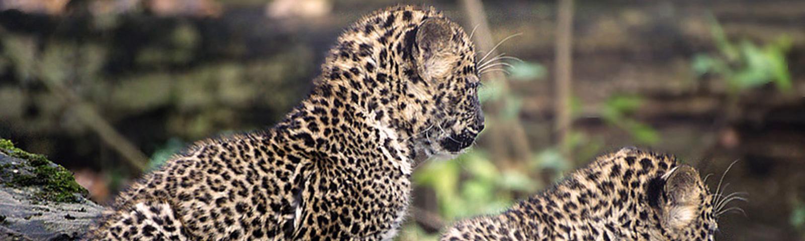 Wildlife Excursions in Sri Lanka