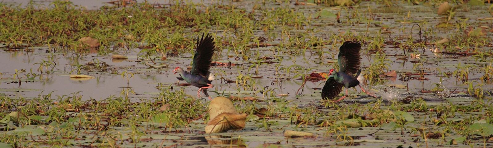 Bird Watching in Sri Lanka