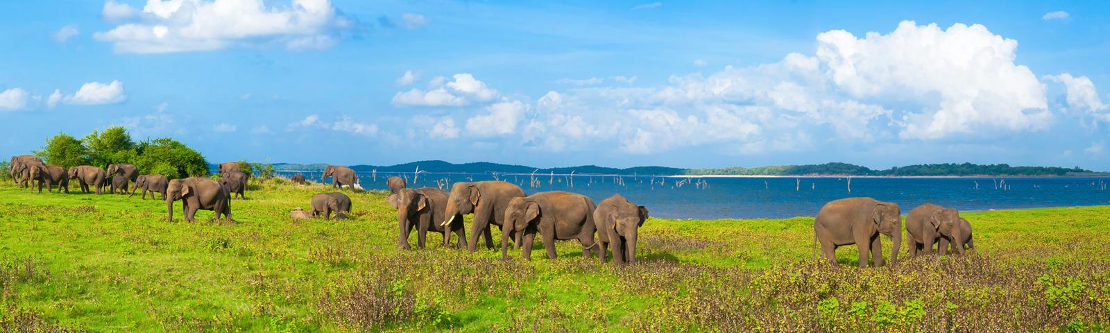 Somawathiya National Park in Sri Lanka
